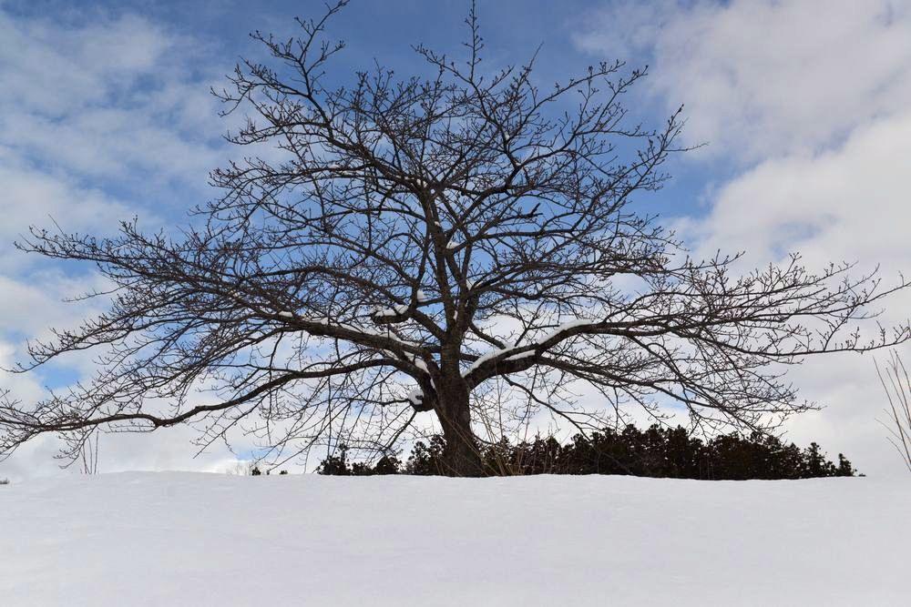 連休の雪景色-5