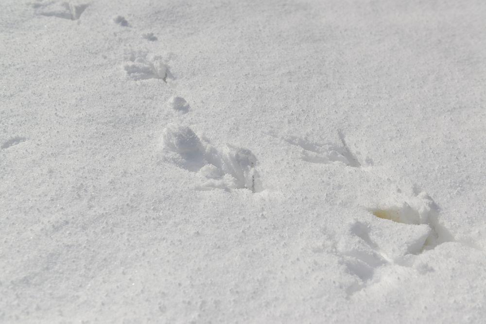 連休の雪景色-6