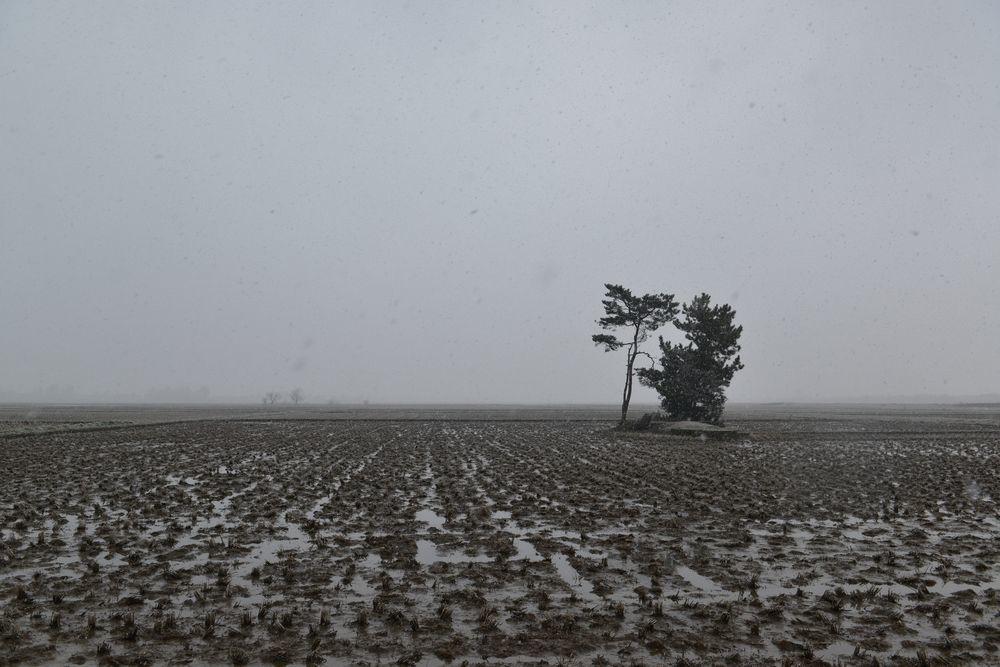 雪が降って来た-1