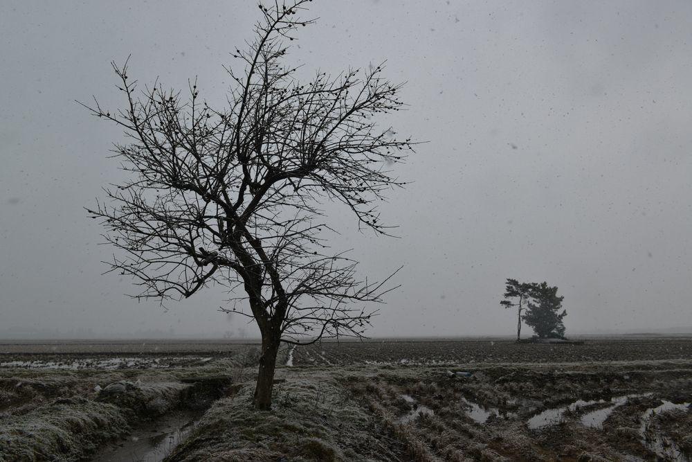 雪が降って来た-3