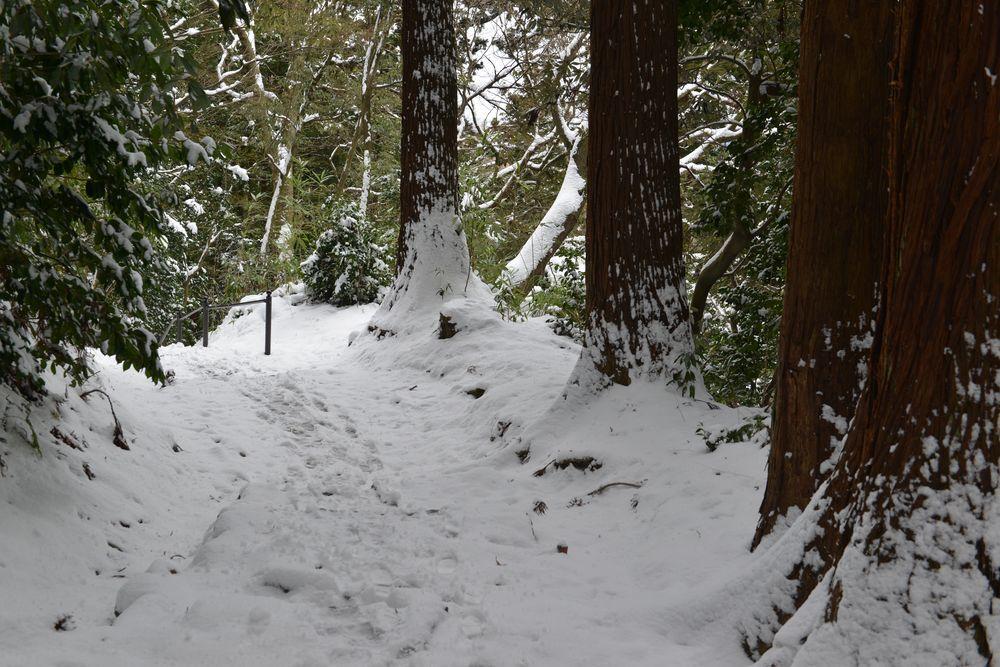 雪の吊り橋-6