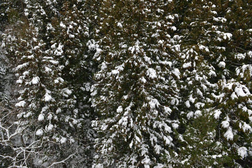 雪の吊り橋-8