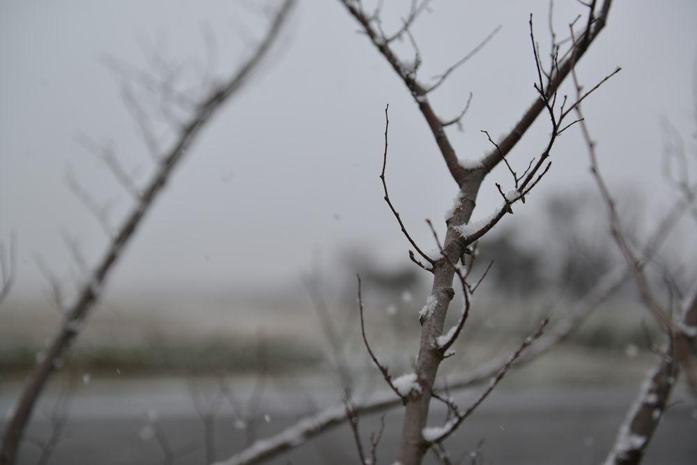 雪降る-5