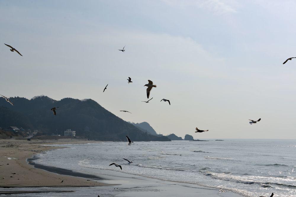 間瀬海岸の鳥たち-1