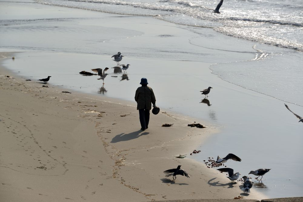 間瀬海岸の鳥たち-2