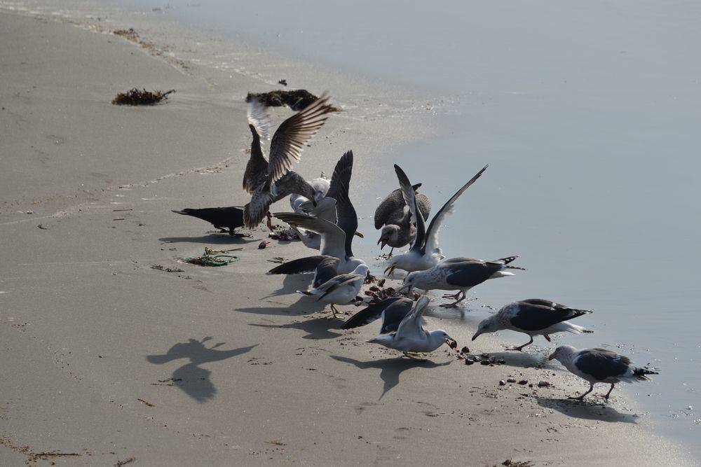 間瀬海岸の鳥たち-3