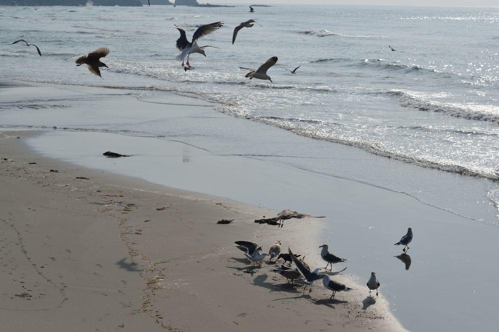 間瀬海岸の鳥たち-4