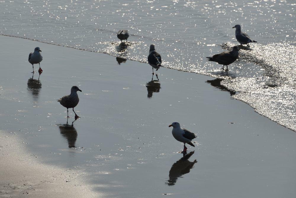 間瀬海岸の鳥たち-5