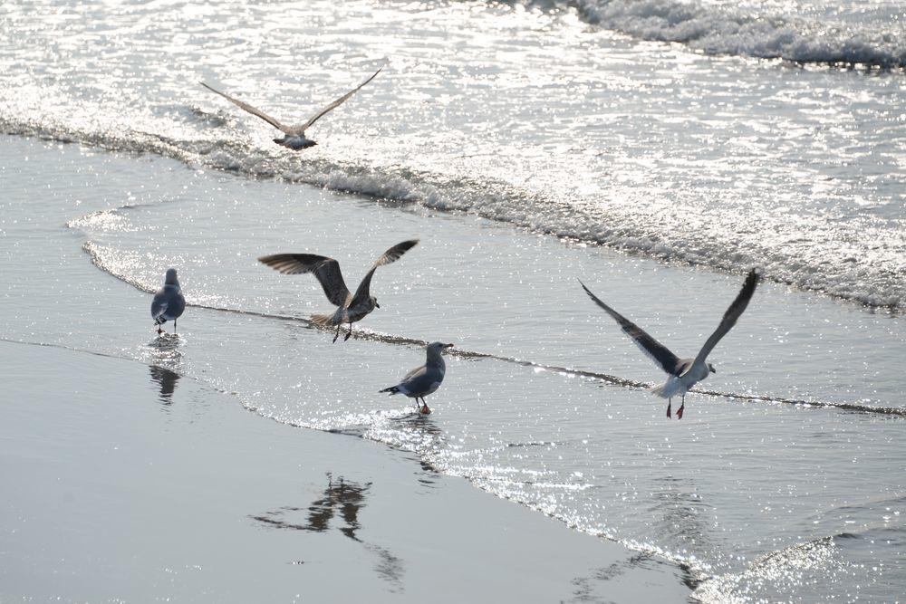 間瀬海岸の鳥たち-6