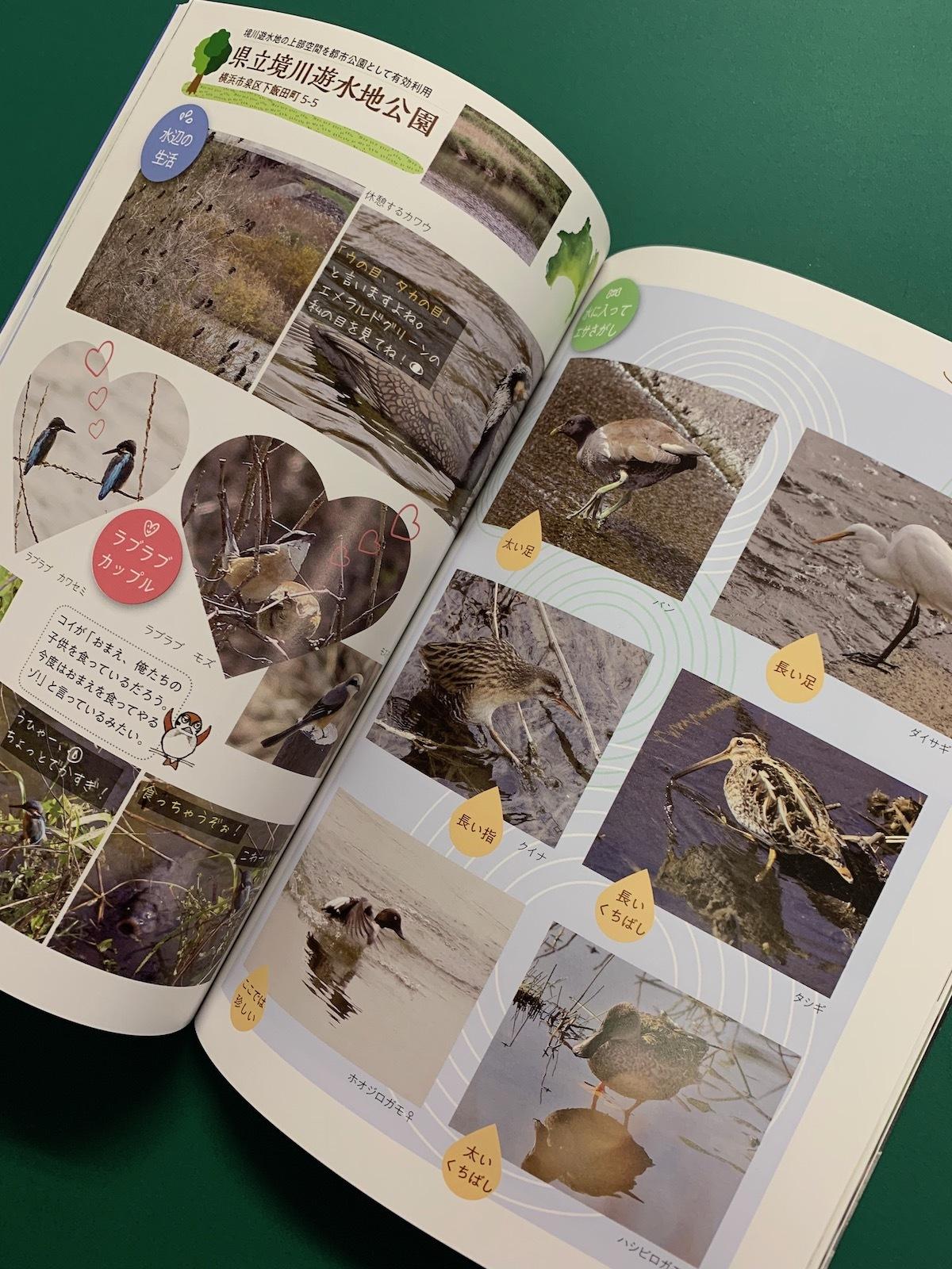 神奈川の公園で見られる野鳥のくらし中身