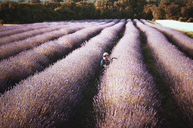 ラベンダー畑と女性