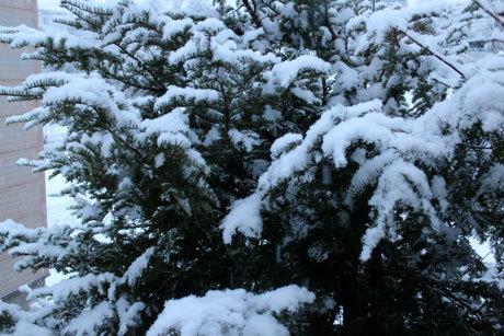 雪の朝だったね