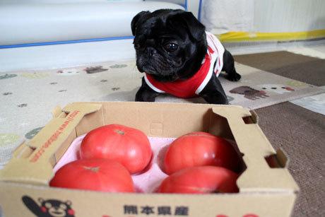 トマトはやっぱり熊本