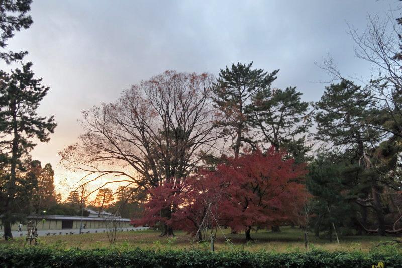 薄暮の京都御所1