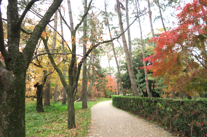 薄暮の京都御所2