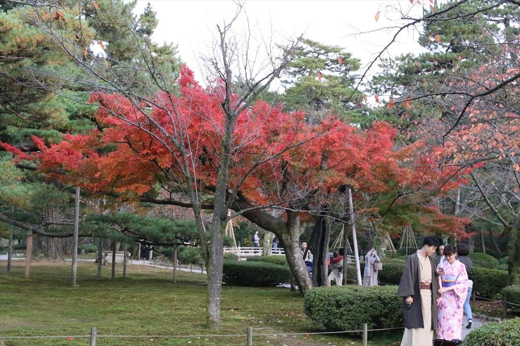 紅葉の具合_2