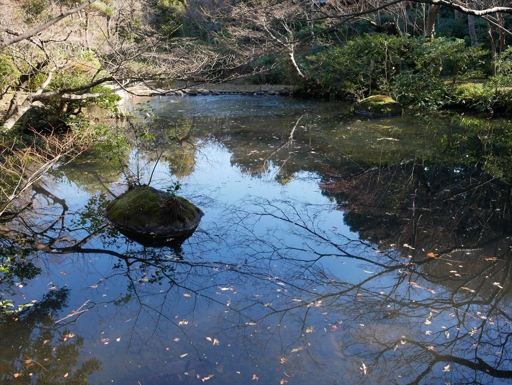 池を渡る_4