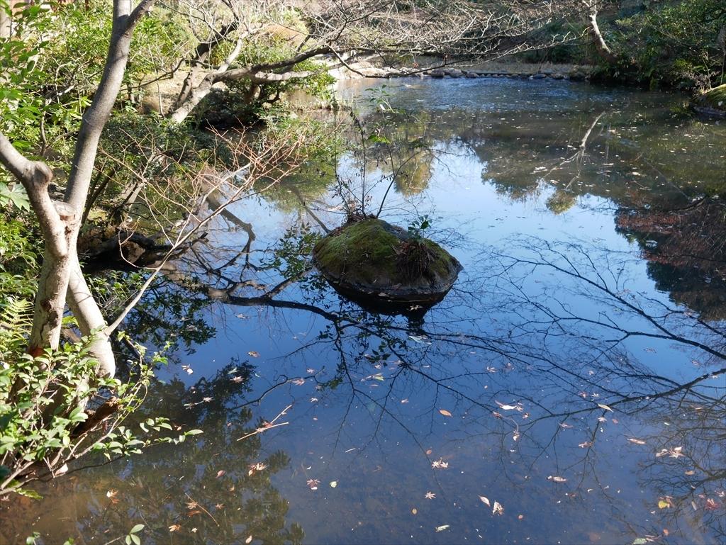 池を渡る_5