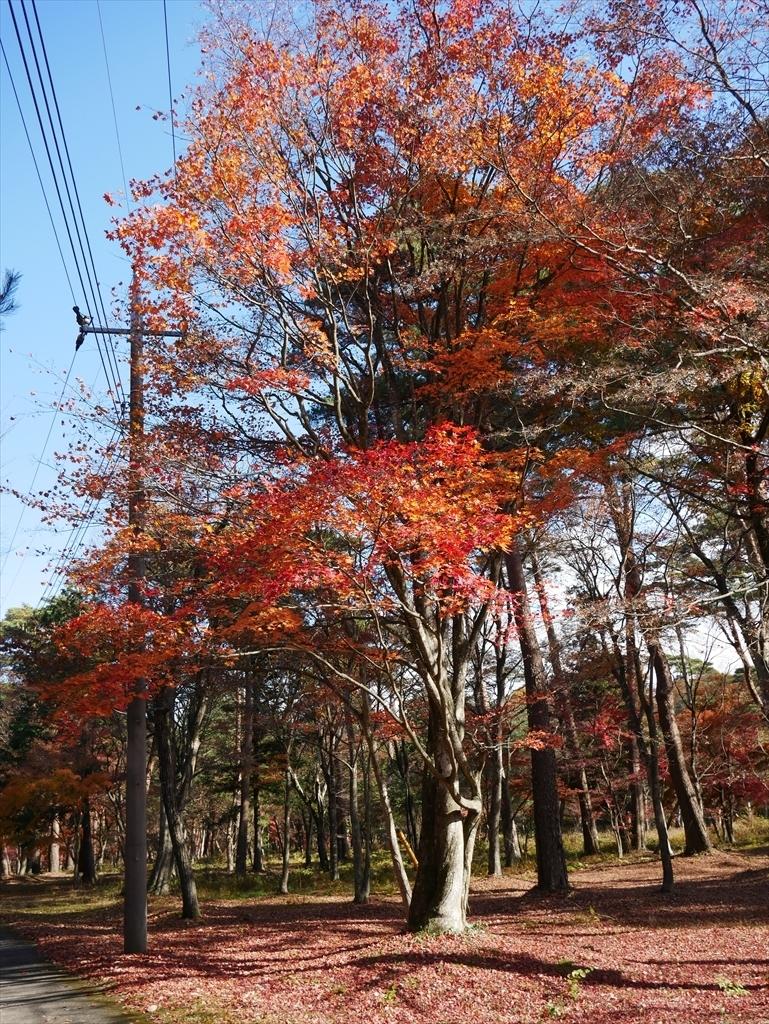 千本松牧場(1)_10