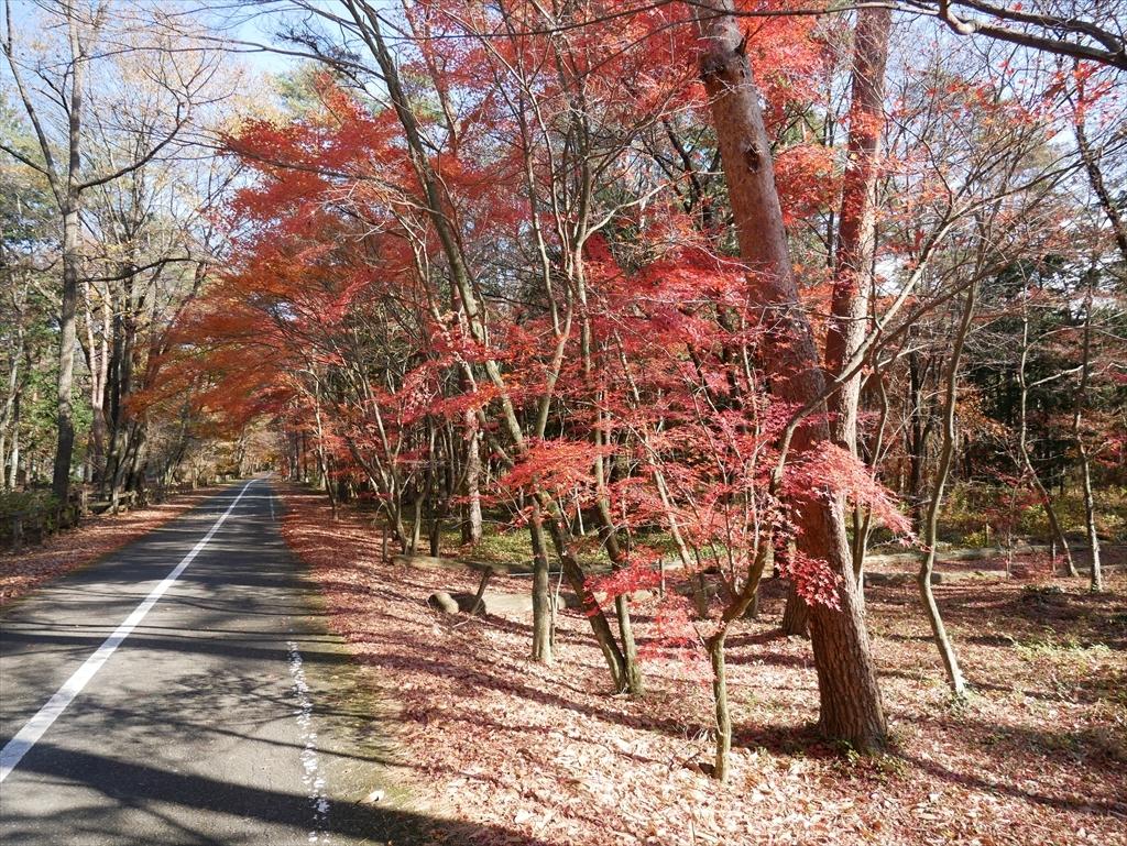 千本松牧場(1)_16