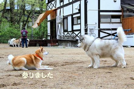 s-dogrun181123-IMG_8461