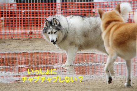 s-dogrun181123-IMG_8474
