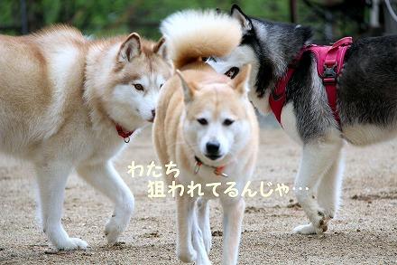 s-dogrun181124-IMG_8482