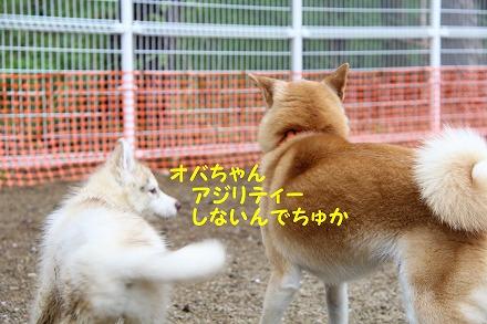 s-2dogrun181125-IMG_8499
