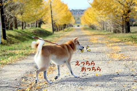 s-ichyou181206-IMG_2316