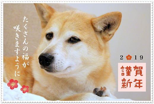 s-iwa190109-1-IMG_9209