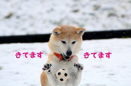 s-yama190121-IMG_3293
