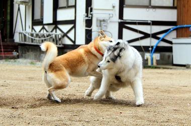 s-dogrun181124-IMG_8459.jpg