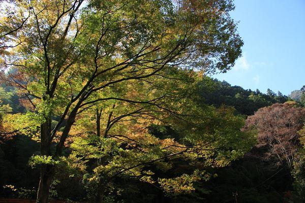20181027_yokosawa_081.jpg