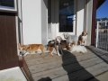 190113暖かい日向に集まるわんわんガーデンの犬たち