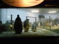 190113大きくなったペンギンの赤ちゃん