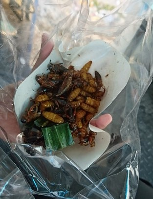 Eat fried insects (1)