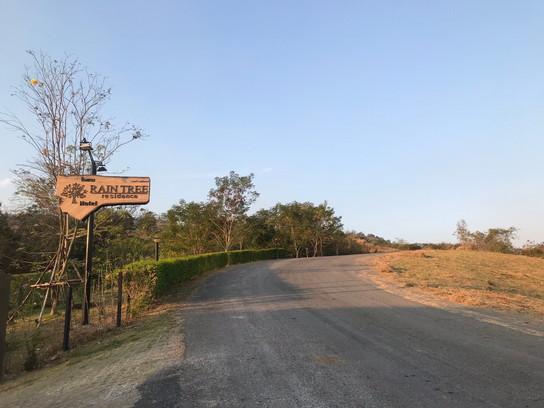 Rain Tree road