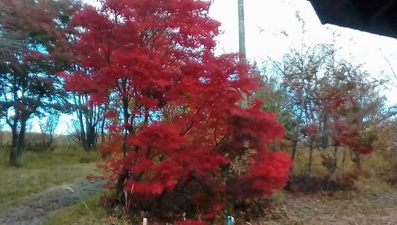 バラギ高原キャンプ場の紅葉