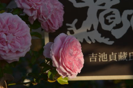 いわての春2019.1.23
