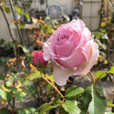 ブログ0126春乃