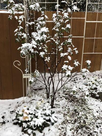ブログ0209雪