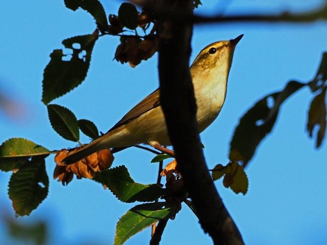 181118野鳥2