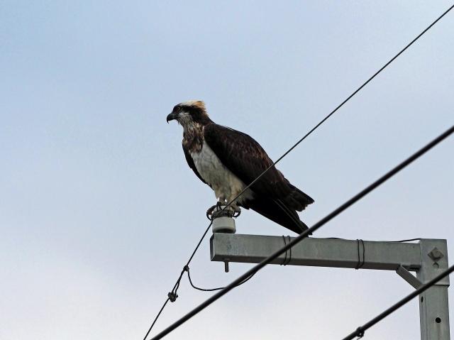 181215野鳥1