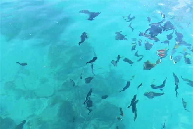 201812沖縄旅行_伊計島ビーチ(3)