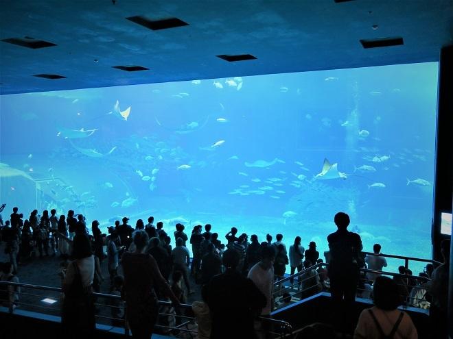 2018沖縄旅行_美ら海水族館(8)