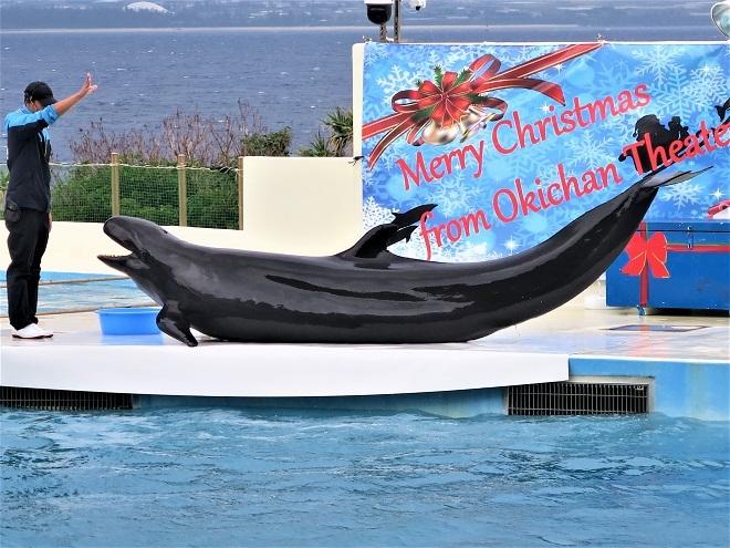2018沖縄旅行_美ら海水族館(12)