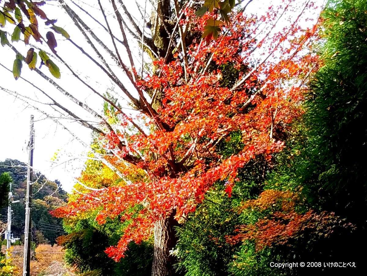 有馬の瑞宝寺公園で紅葉狩り