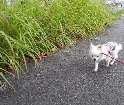 にの 散歩