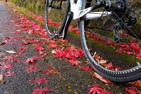 09紅葉とコルナゴ