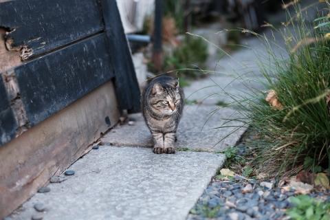 01谷中のネコ